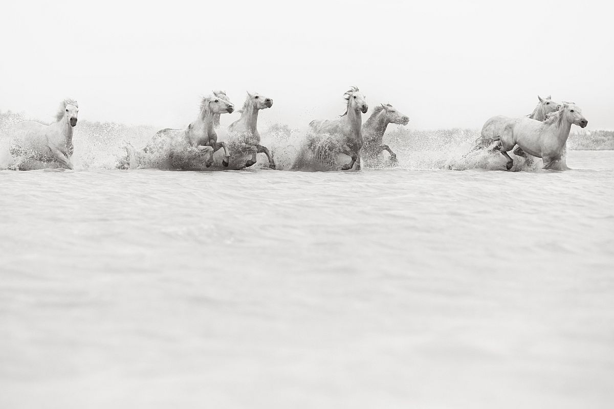 drew-doggett-band-of-rebels-white-horses-of-camargue-20