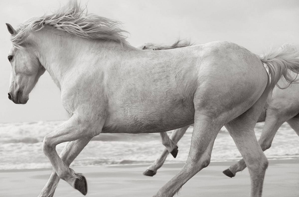 drew-doggett-band-of-rebels-white-horses-of-camargue-22
