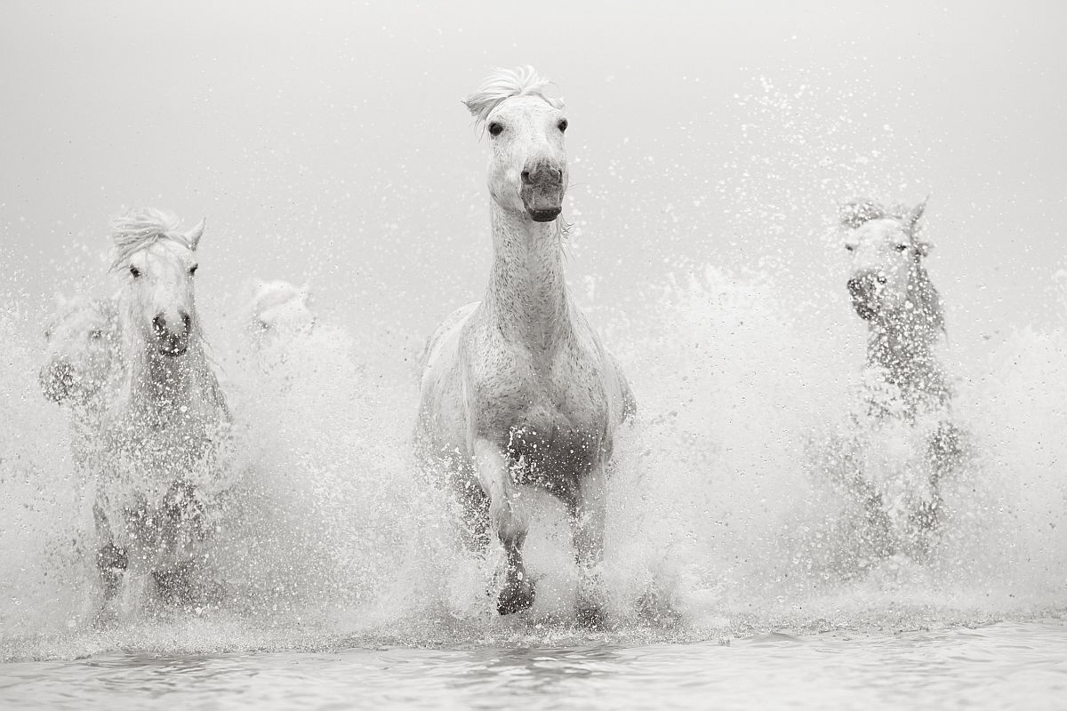 drew-doggett-band-of-rebels-white-horses-of-camargue-23