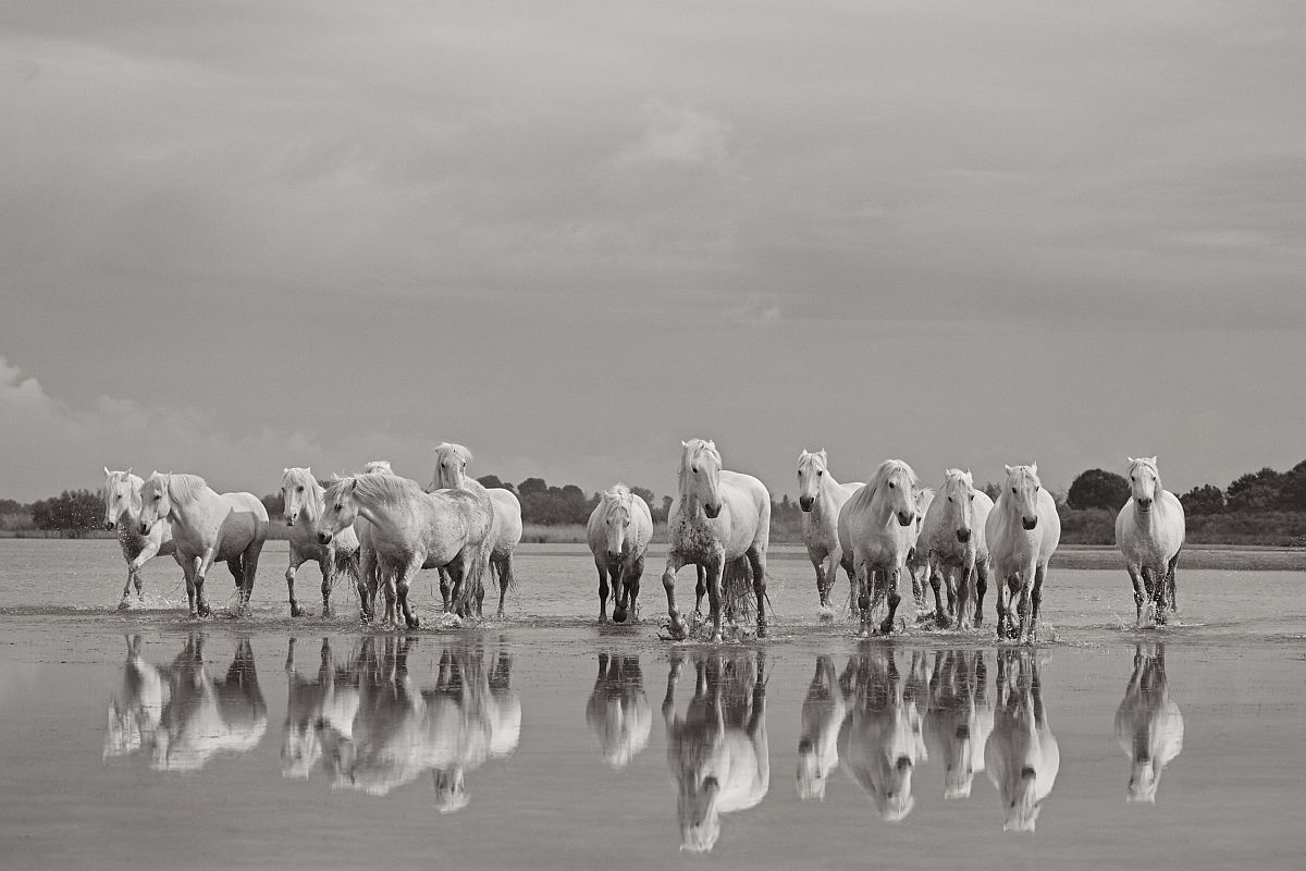 drew-doggett-band-of-rebels-white-horses-of-camargue-26