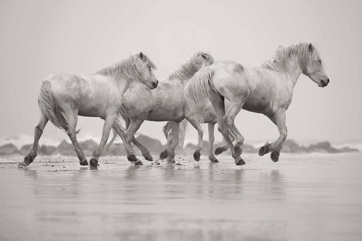 drew-doggett-band-of-rebels-white-horses-of-camargue-27