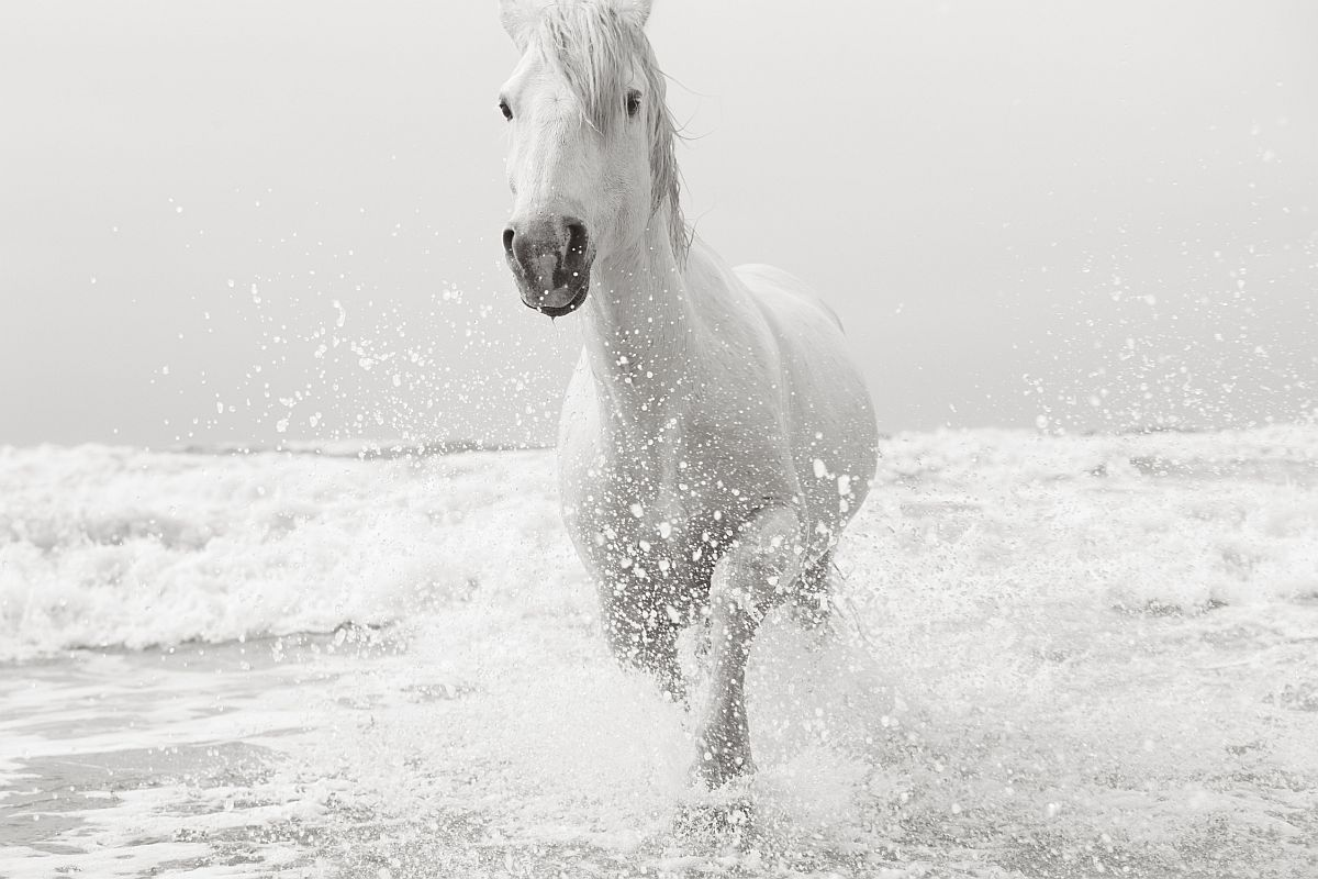 drew-doggett-band-of-rebels-white-horses-of-camargue-28