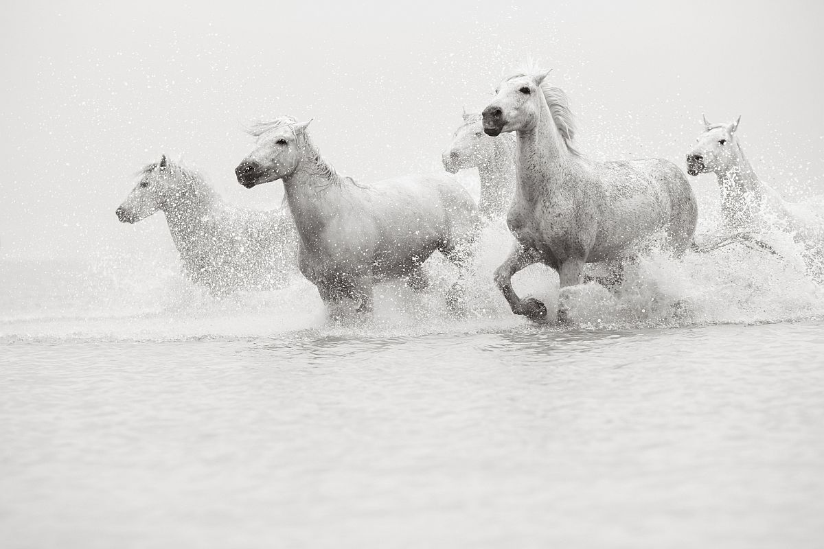 drew-doggett-band-of-rebels-white-horses-of-camargue-32