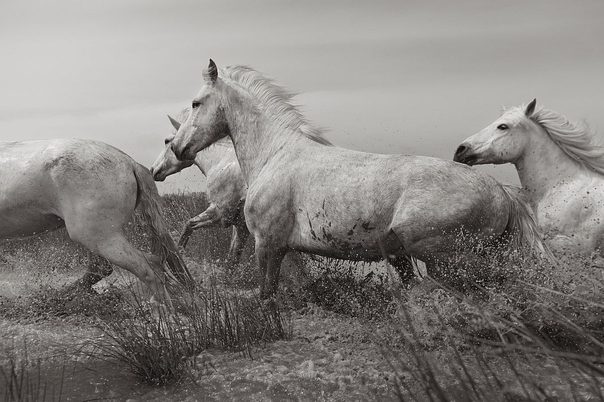 drew-doggett-band-of-rebels-white-horses-of-camargue-35