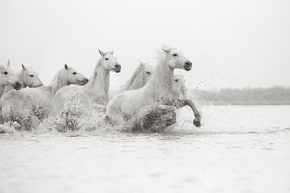 drew-doggett-band-of-rebels-white-horses-of-camargue-38