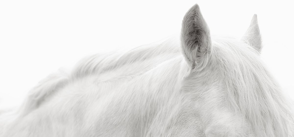 drew-doggett-band-of-rebels-white-horses-of-camargue-39