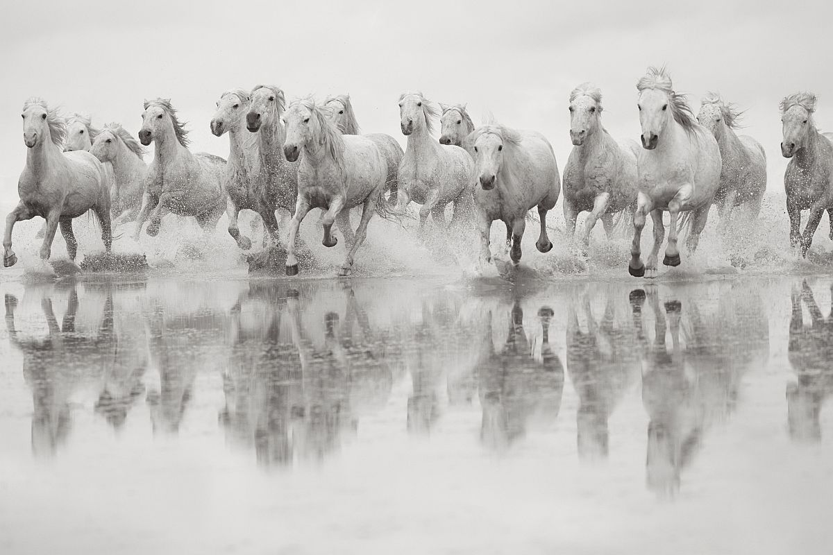drew-doggett-band-of-rebels-white-horses-of-camargue-40
