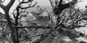 Lee Friedlander: Western Landscapes