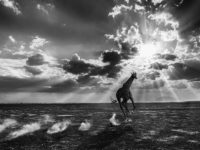 David Yarrow: Wild Encounters
