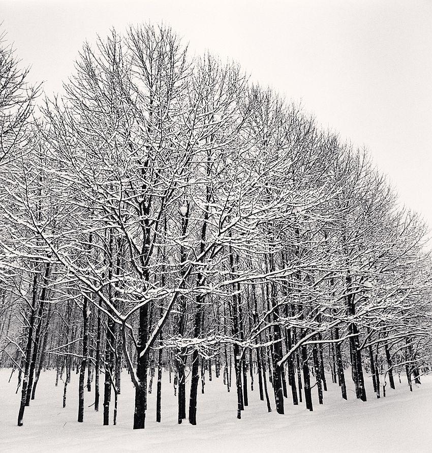Forest Snow, Sakkuru-Otoineppu, Hokkaido, Japan, 2014