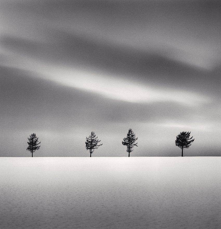 Kurosawa's Trees, Study 2, Memanbetsu, Hokkaido, Japan, 2009