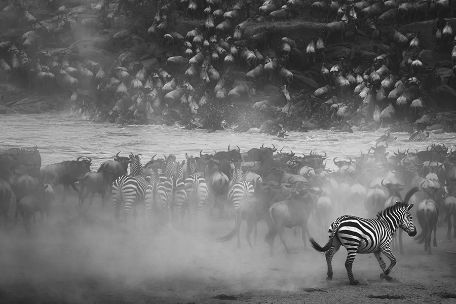 Go for fight by PANOS LASKARAKIS (Greece) – 1st Place Winner – Wildlife Photographer of the Year 2016