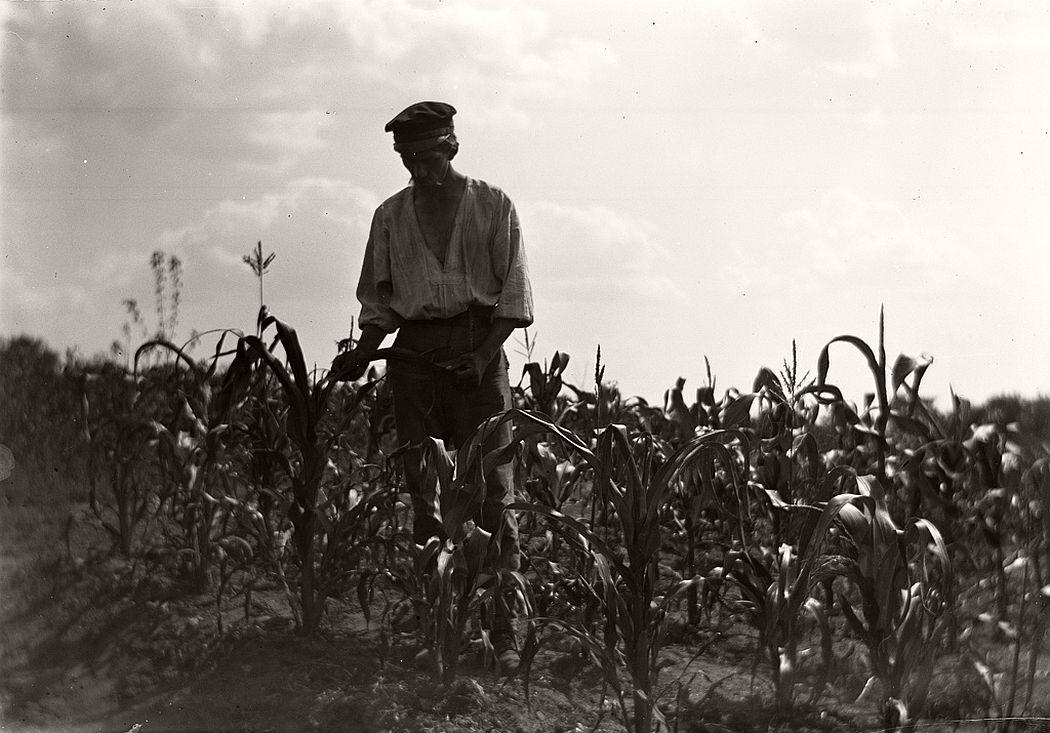 Gardener in corn country, Stjärneborg, 1914.