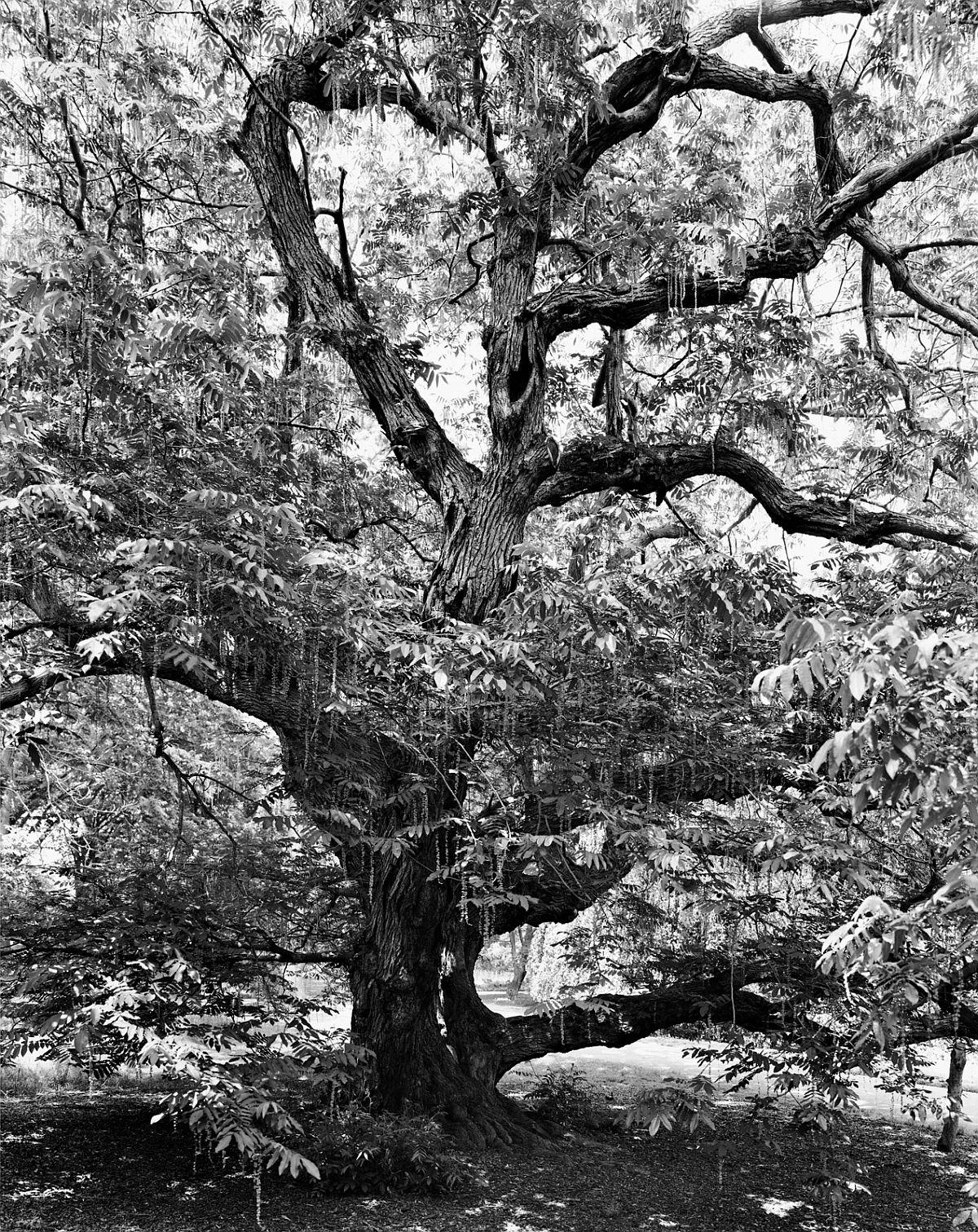 © Mitch Epstein: New York Arbor