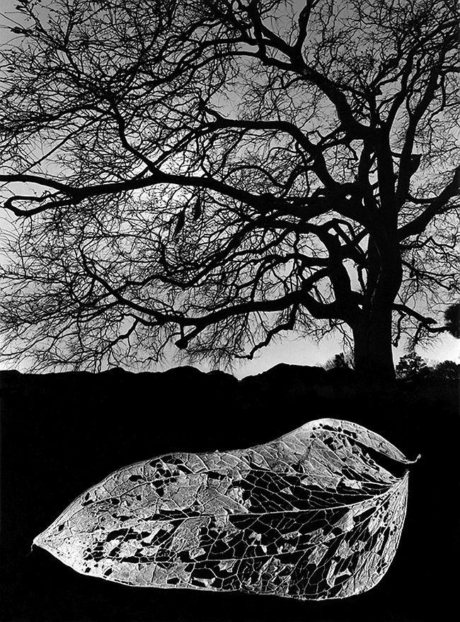 Jerry Uelsmann, Untitled, 1967