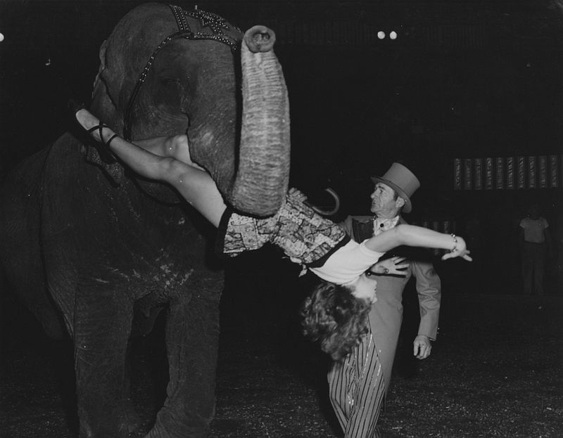 The Elephant-Number in Madison Square Garden, 1956