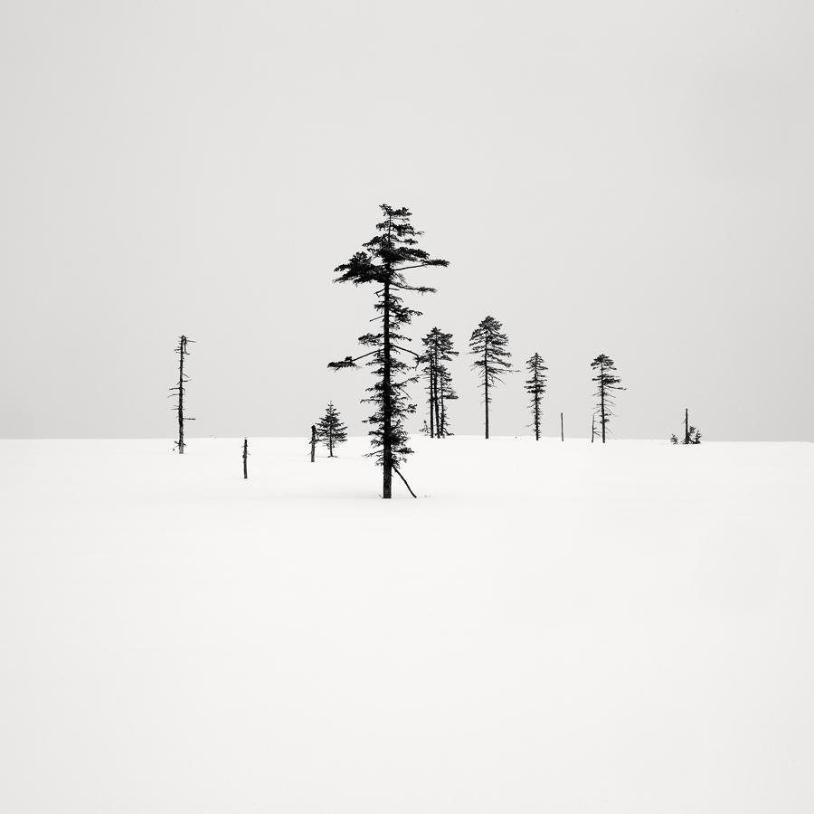 Landscape 2ND PLACE WINNER (professional) 2ND PLACE WINNER Olivier Robert, Trees of Japan