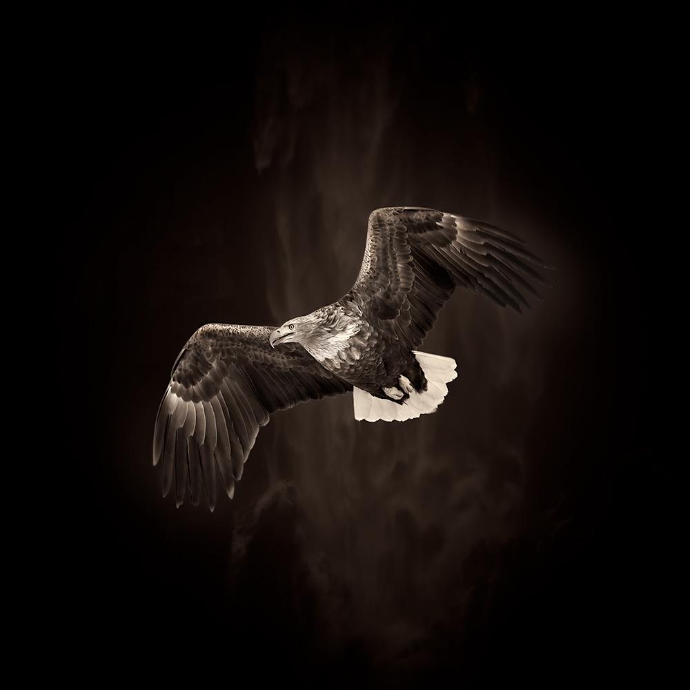 Wildlife-Animals 2ND PLACE WINNER (amateur) 2ND PLACE WINNER Eriko Kaniwa, Flying Eagle
