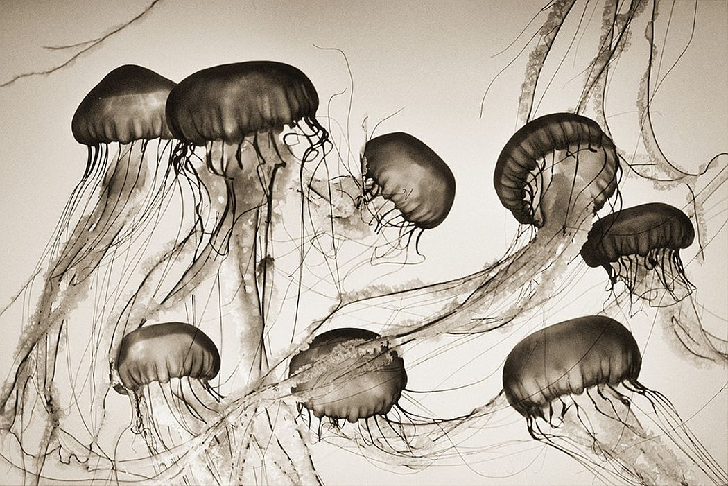 © Henry Horenstein: Animalia