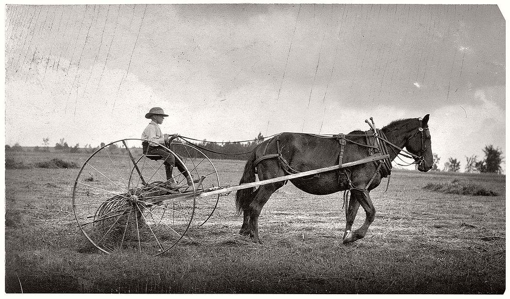Eight-year-old boy driving horse rake, Western Massachusetts, 1915