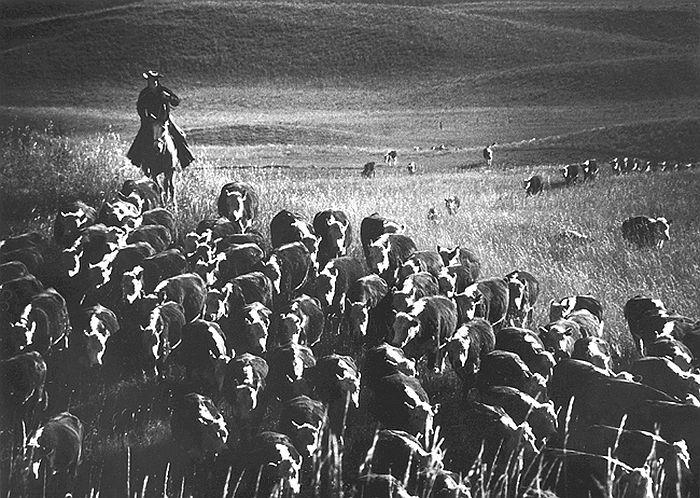 The Last Great Overland Cattle Drive, near Cedar Butte, South Dakota, 1960 - Fidel Castro, Hometown Greetings, 1959