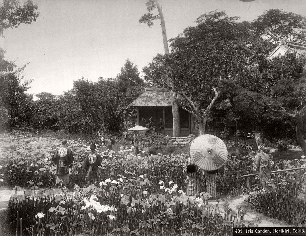 Iris garden, Horikiri in Tokyo, ca. 1870