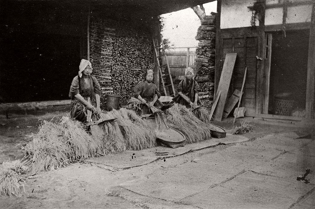Threshing rice, ca. 1880