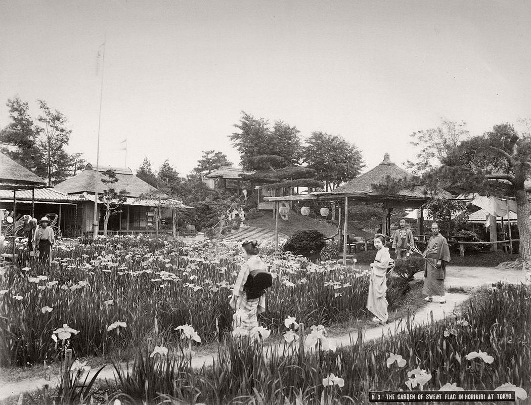 Horikiri's Iris Garden in Tokyo, ca. 1880