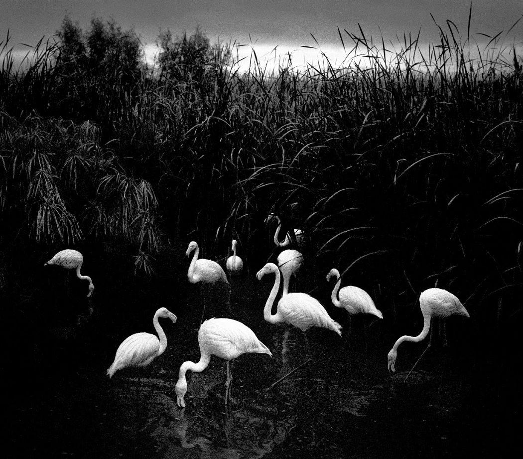 © Pentti Sammallahti