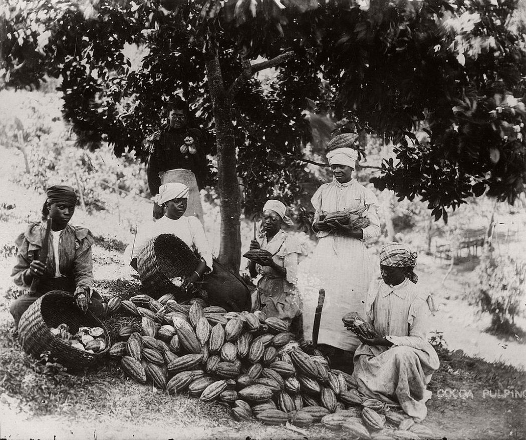 Sorting cocoa pods, Jamaica