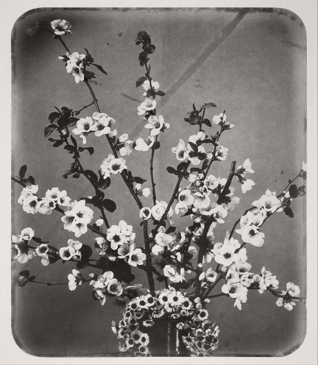 Floral Still Life, 1852.