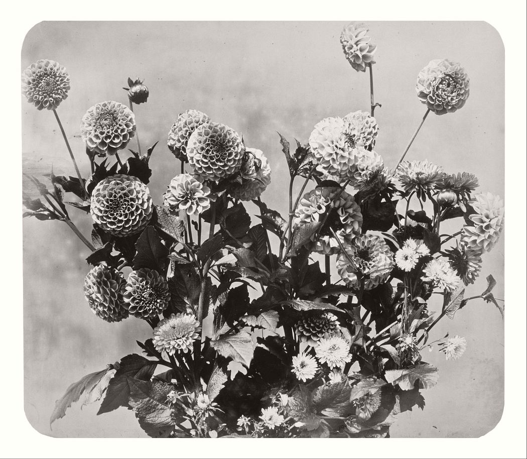 Untitled, 1858.