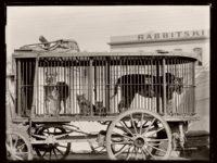 Biography: 19th Century photographers Burton Brothers