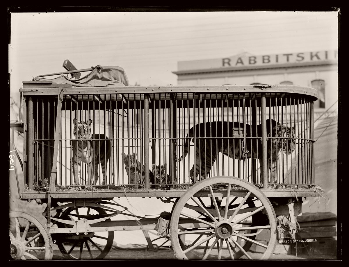 Fitzgerald Brothers Circus & Menagerie. Photo by Burton Brothers studio, circa 1894, Dunedin