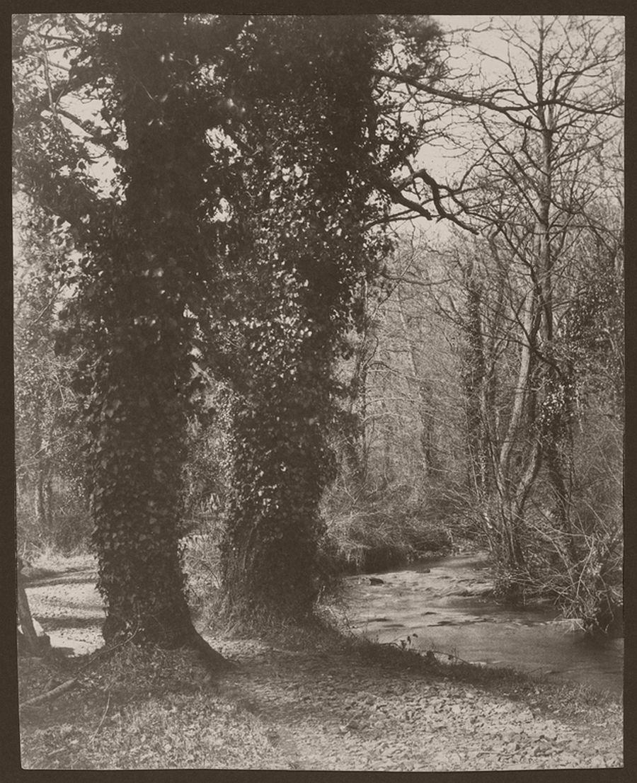 Ivy Covered Trees, 1855
