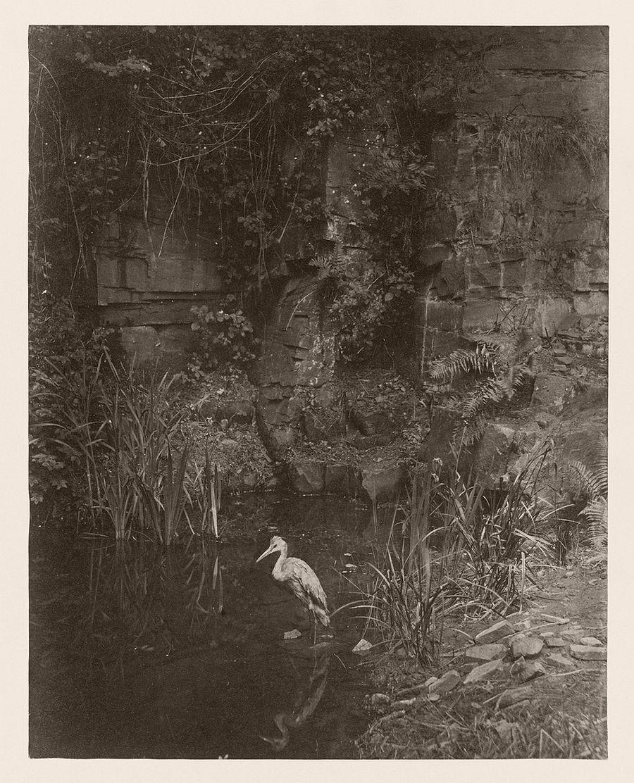 Piscator, No. 2, 1856