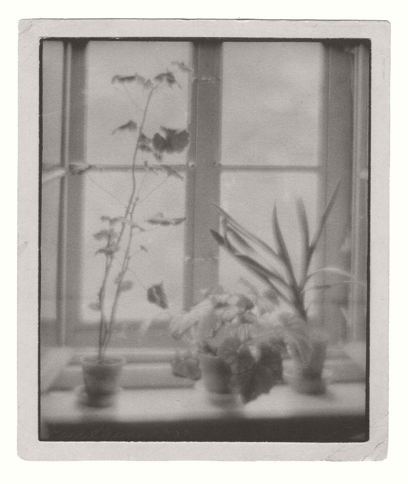 STRUSS, Karl (1886-1981), Potted Plants on a Windowsill, 1909