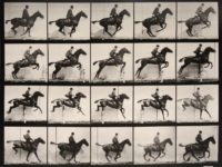 Eadweard Muybridge: Animal Locomotion