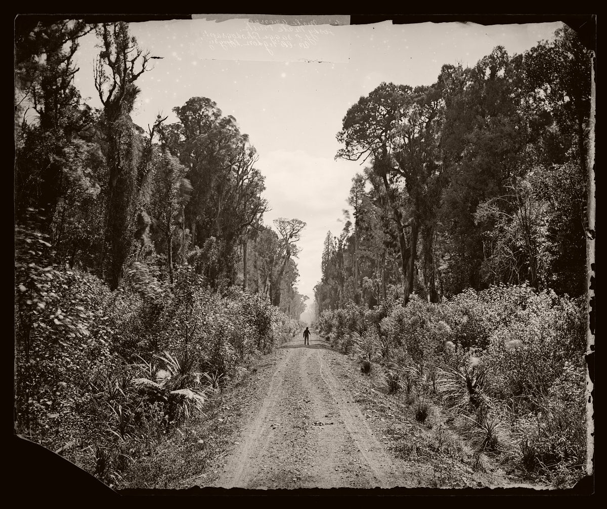 Five Mile Avenue, Forty Mile Bush, 1875.