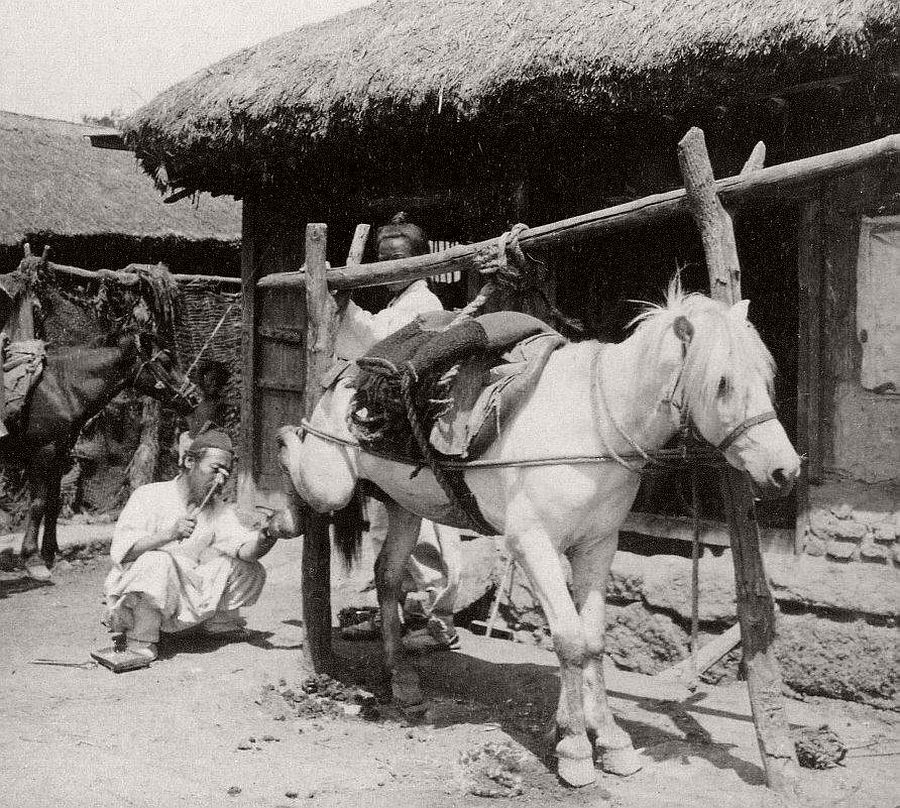Shoeing a horse at the blacksmith's home, Seoul, 1903