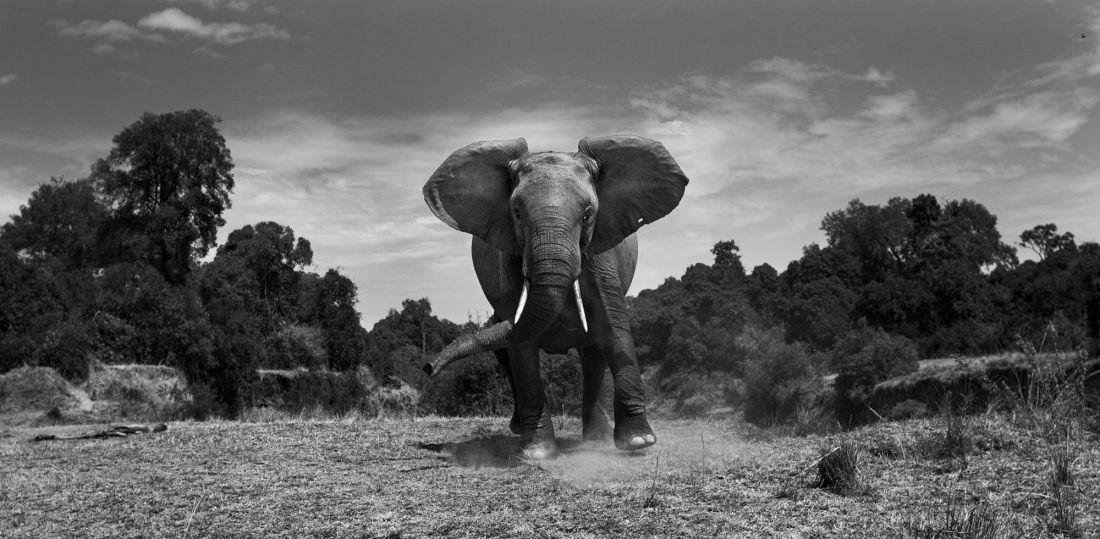 © Anup Shah: The Mara / MonoVisions Awards 2017 winner