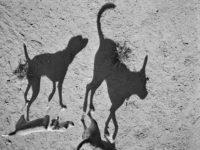 Thomas Roma: Plato's Dogs