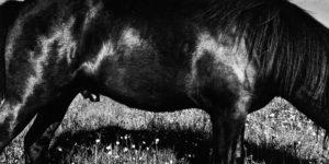 Anders Petersen: Zoo