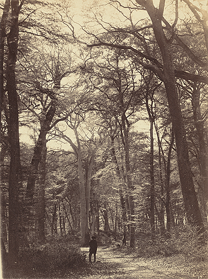 Constant Alexandre Famin, Forest Scene, c. 1865, albumen print, National Gallery of Art, Washington, Robert B. Menschel Fund
