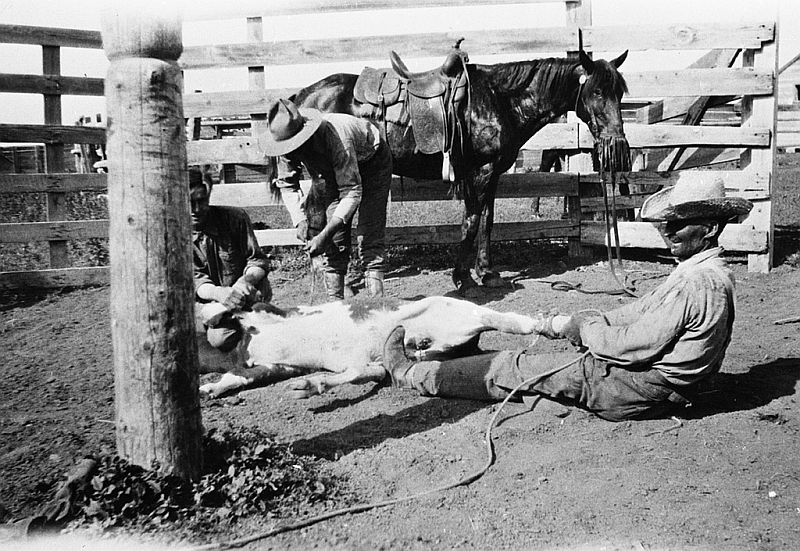 Branding at Brown Ranch, Queenstown, Alberta, 1900-03