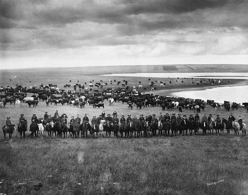Last Bow River Ranche cattle round-up, near Cochrane, Alberta, 1905-06