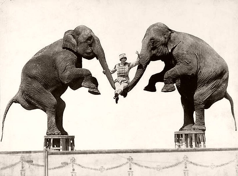 Circus Performers, 1910s by Harry A. Atwell