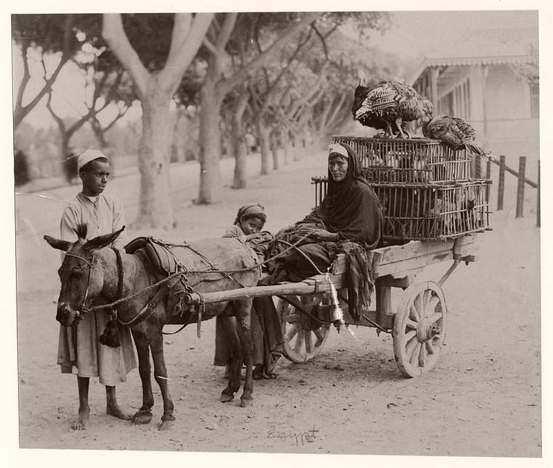 People with their donkey cart