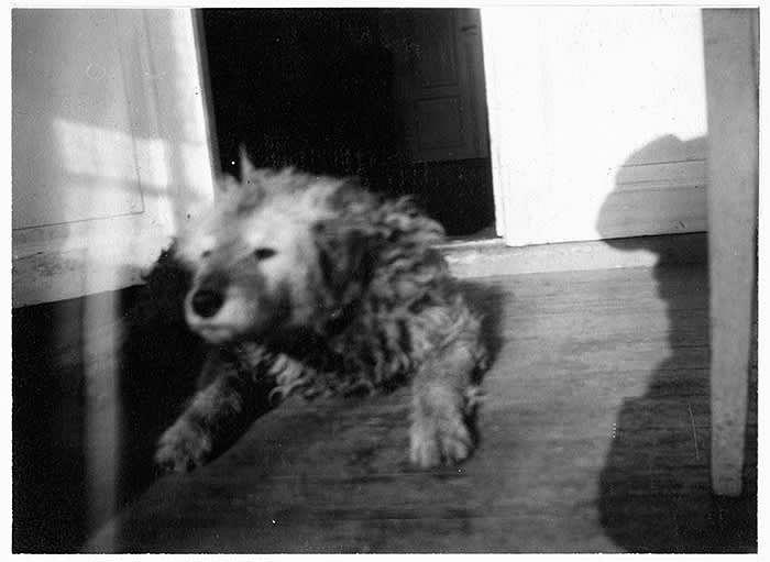 'Munch's Dog 'Fips'' (1930) © Edvard Munch/Munch Museum