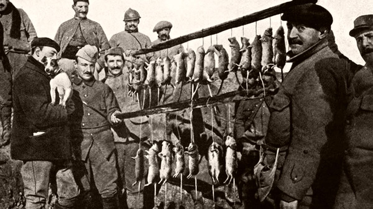 The result of 15 minute's rat-hunting in a French trench. Note the Jack Russell Terrier in the gentleman's arms at left.